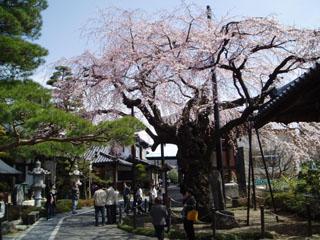 2009_sakura-taxi2.jpg