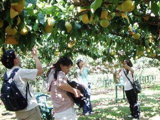 2010_pear_tour5.JPG