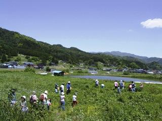 2011-tsumikusa01.jpg
