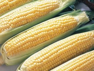 2011_corn_1.jpg