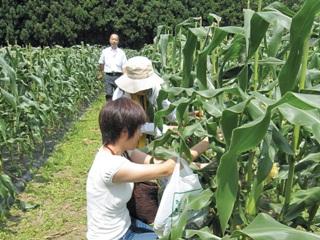 2011_corn_2.jpg