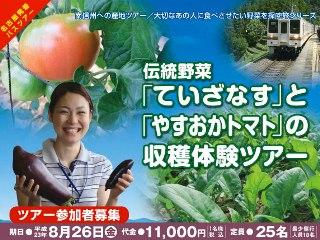 2011_nasu_tomato1.jpg