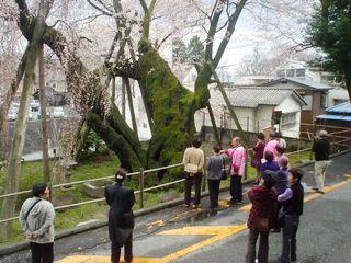 2011_sakura_bus4.JPG