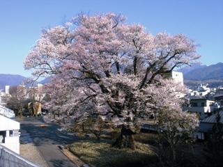 2011_shishimaitour_4.jpg