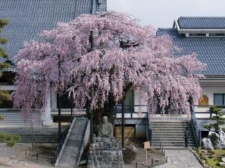 2011_shishimaitour_6.jpg