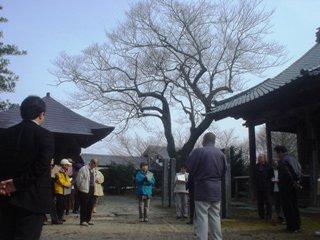 2012_sakuramori_guide1_1.JPG