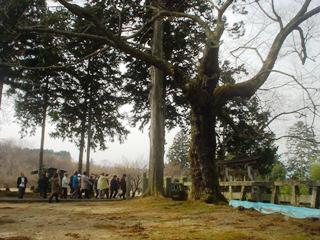 2012_sakuramori_guide1_2.JPG