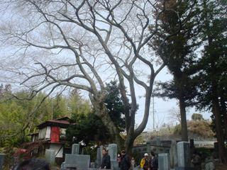 2012_sakuramori_guide1_3.JPG