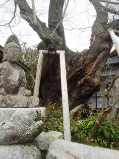 2012_sakuramori_guide1_6.JPG