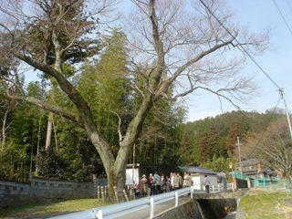 2012_sakuramori_guide3-2.JPG