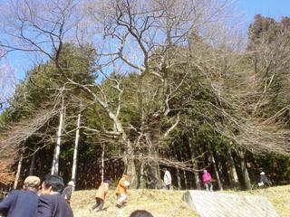2013sakura_kensyu2_4.JPG