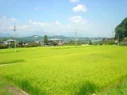 07-aki-imadadaira1.jpg