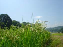 07-aki-imadadaira2.jpg