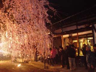 2008_yozakaura_2.JPG