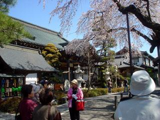 2009_sakurameguri_1.JPG