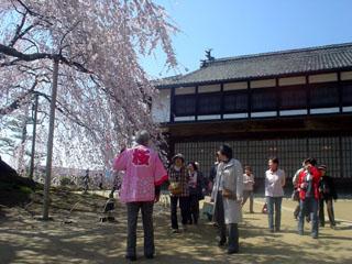 2009_sakurameguri_2.JPG