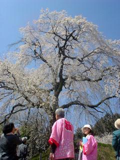 2009_sakurameguri_3.JPG