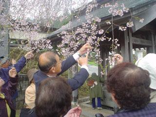 2009_sakuratour2_1.JPG