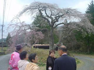 2009_sakuratour2_2.JPG