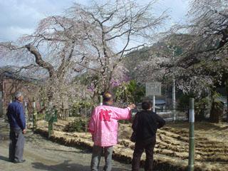 2009_sakuratour2_4.JPG