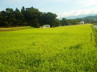 2010_ikuse_aki_5.JPG