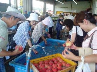 2010_peach_5.JPG