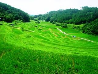 2010_seiiku_1.JPG