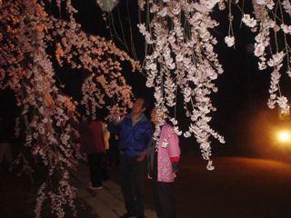 2010_yozakura_4.JPG