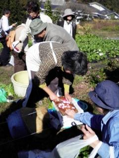 2011_akane4.JPG