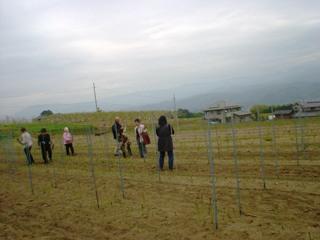 2011_asupara_1.JPG