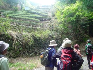 2011_sakanbe_5.jpg
