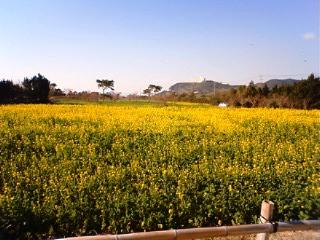 2011_tahara.jpg