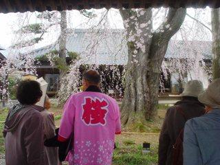 2012_sakura2_tour_1.JPG
