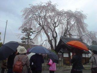 2012_sakura2_tour_2.JPG