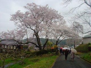 2012_sakura2_tour_4.JPG