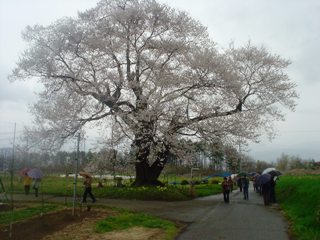 2012_sakura2_tour_5.JPG