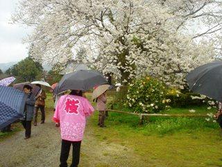 2012_sakura2_tour_9.JPG