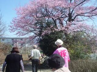 2012_sakura_tour_2.JPG