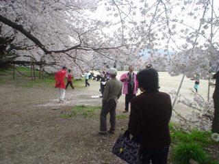 2013_sakuratour4.JPG