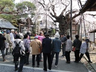 2014_sakuratour1_2.JPG