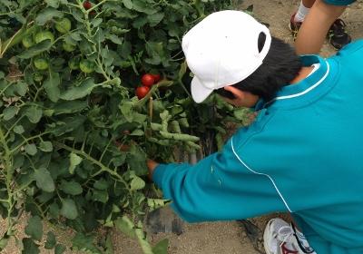 野菜収穫 イメージ01