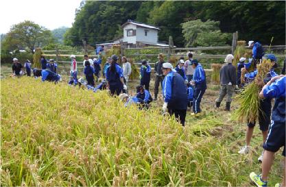 稲刈り イメージ02