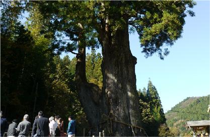 巨木と語る イメージ02