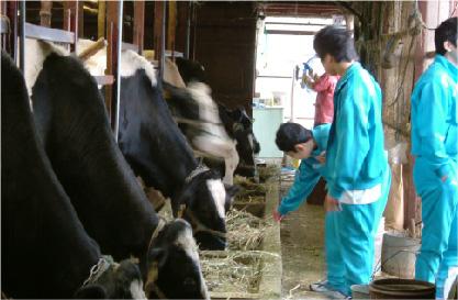 酪農農家体験 イメージ01