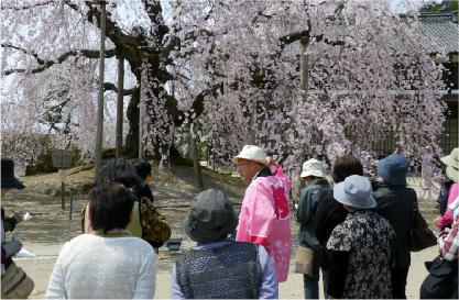 桜守の旅 イメージ02