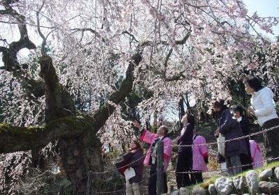 桜守の旅 イメージ01