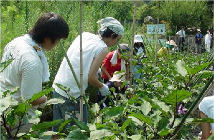 野菜収穫 イメージ02